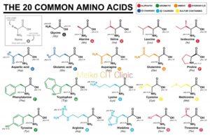 amino acids 1024x659 1 300x193 - 血中アミノ酸によるがんリスクスクリーニング検査「アミノインデックス」のご案内